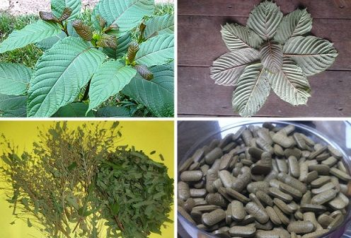 Why Do We Use Kratom? Kratom Effects at Higher and Lower Doses