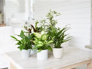 How to Care for (and Propagate) Your Prayer Plant