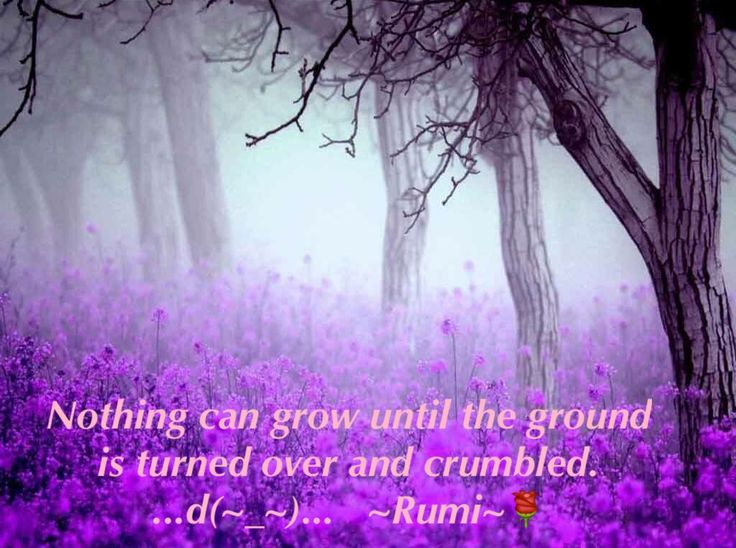 Nothing can grow until the ground is turned over and crumbled. ...d(~_~)...   ~Rumi~