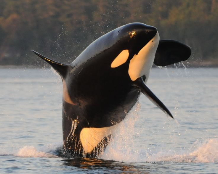Where can I learn to train Dolphins, Seals, and Killer Whales at?