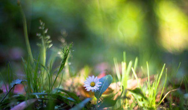 Обои на рабочий стол: макро, природа, растения, трава, цветок