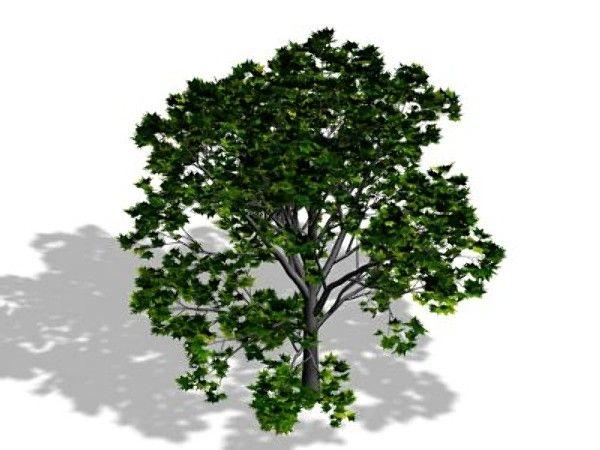 tree max free - Tree01.zip... by MAXMan