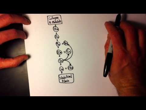 Easy Coagulation Cascade (1 of 2) - Simple & easy to remember Not sure if this is really helpful...