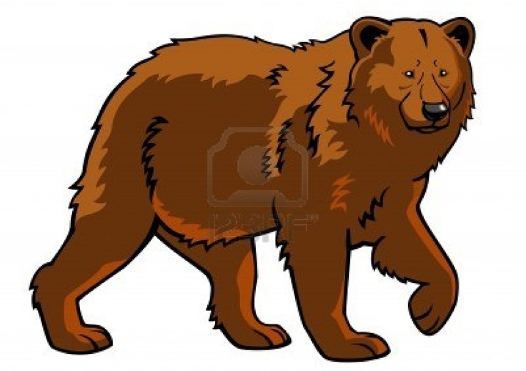 bear,brown bear,ursus arctos,image,side view picture isolated on white background,full length Stock Photo