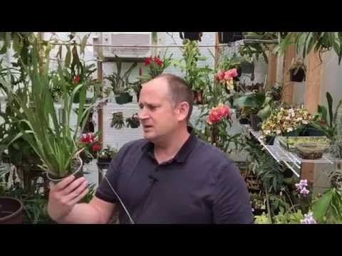 how to look after an orchid house plant