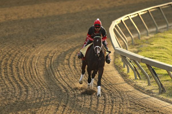 Preakness Stakes 2017: The Experts Make Their Picks