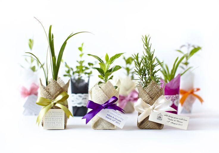 Unique Wedding Bomboniere and Plant Bomboniere - Flourish Bomboniere