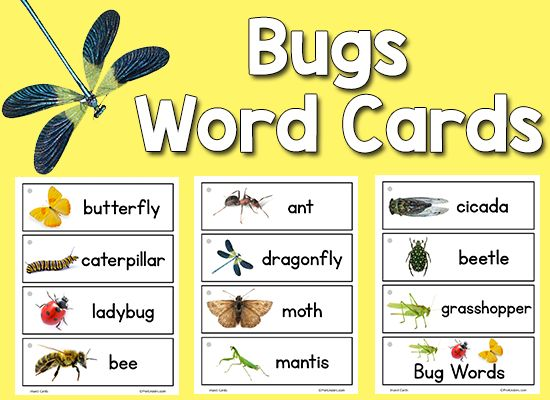 Bugs Insect Picture Word Cards