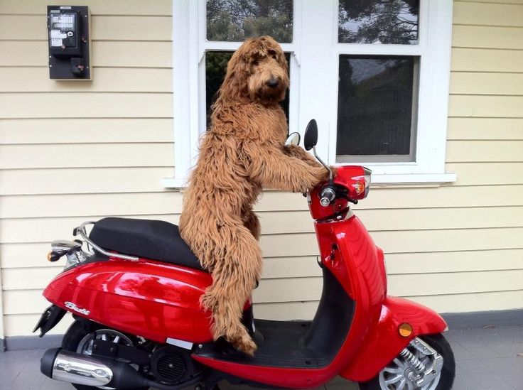 You've got 5 minutes.   Write what the dog did  the day when he stole the family Vespa.