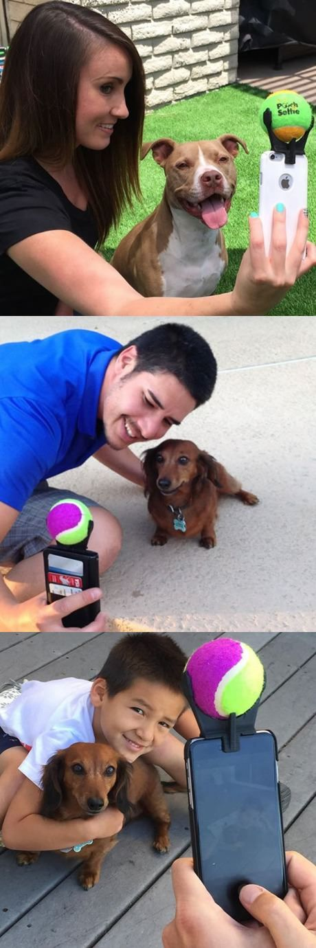 Lastly, your canine will sit and pose for the right selfie