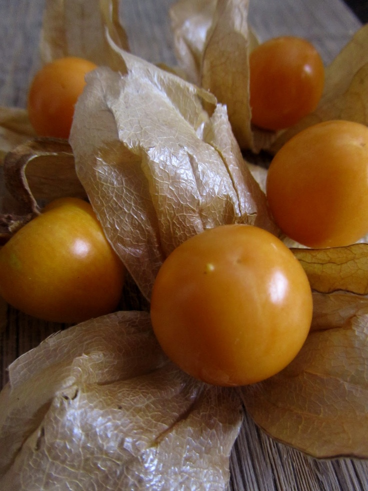 """Physalis. Purportedly edible. I liked their smell but they taste... what's the plant equivalent of """"gamey""""?"""