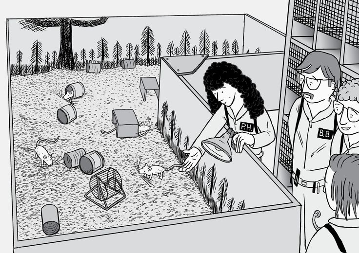 High angle view of the completed, painted Rat Park enclosure. The research team release the lab rats into their new home, filled with wood shavings, tin cans and toys.  Image from Stuart McMillen's comic Rat Park.