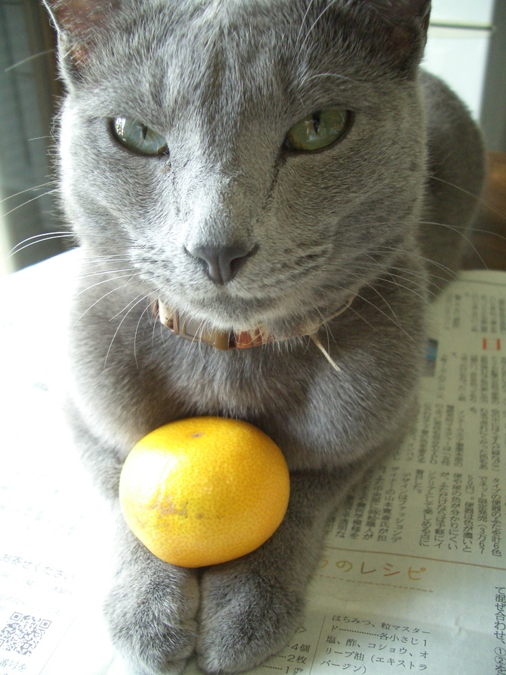 How is mandarin orange, one?