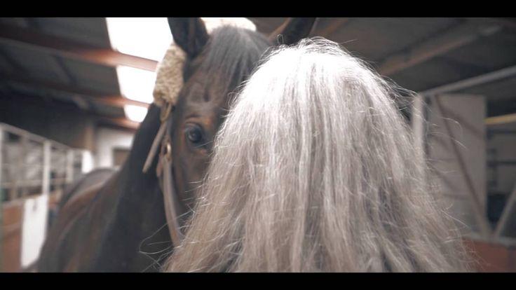 Equine Aroma film Trailer. Har idag været med som assistent til en Equine Aroma Behandling, det var sådan en kanon oplevelse at se hvordan hesten slappede af mens han fik behandlingen. Så nu er jeg blevet mere klat til at selv tage ud og give sådan nogle behandlinger.