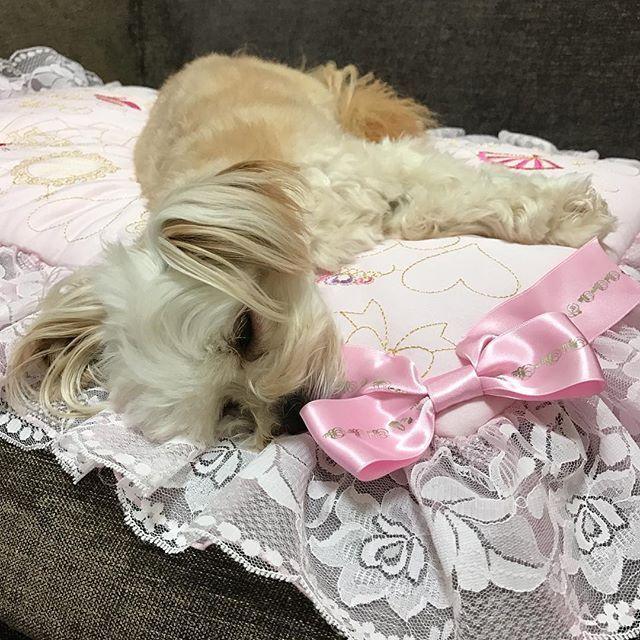 待ちくたびれプーちゃん😣💦 お帰りの舞の後、ネムネムの中でもオヤツをもらうのは忘れないプーちゃん💖 オヤツもらったら爆睡✨ * * #チワプー #ミックス犬 #愛犬 #トイプードル #チワワ #dogstagram #cutedog #lovedog #toypoodle #chihuahua