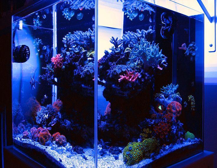 Best 10 Aquarium Led Lighting Ideas On Pinterest