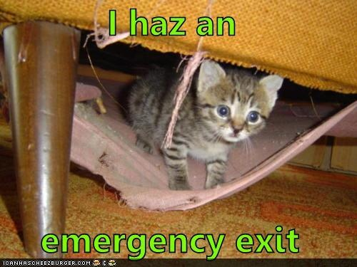 emergency exit: Cat Chat, Adorable Animals, Gatos Cats, Crazy Cat, Adorable Things, Funny Felines, Cat Lady