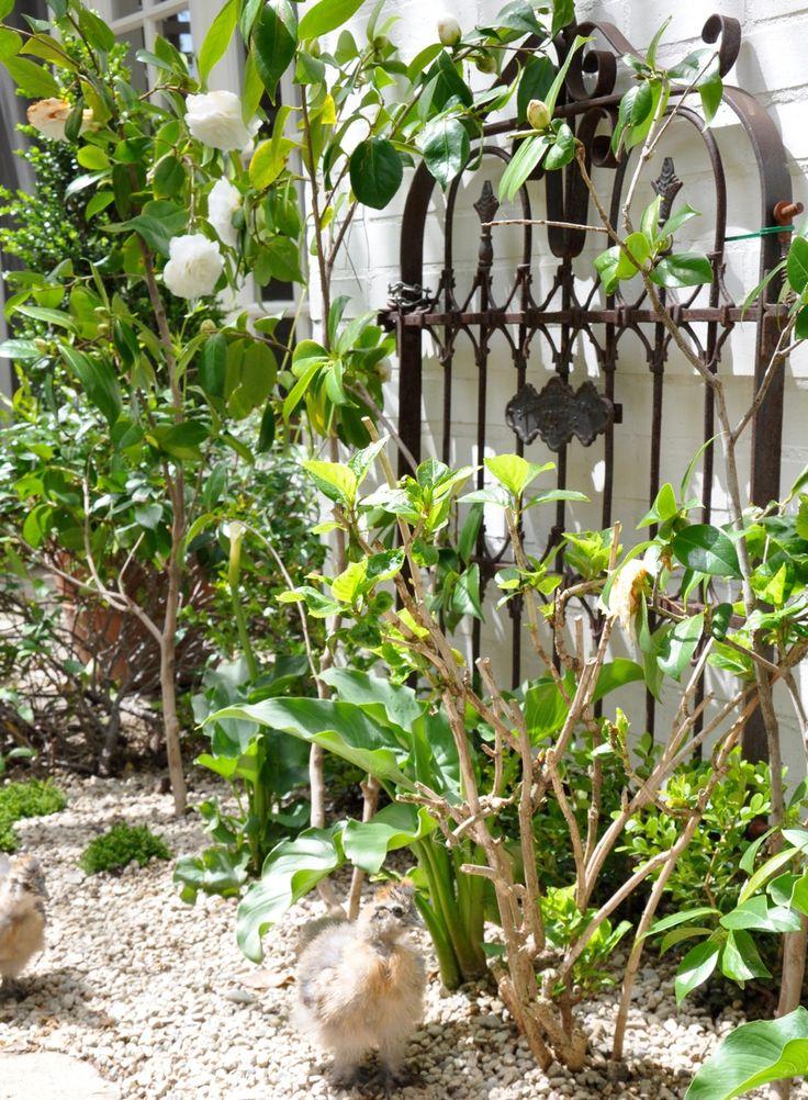 love this vintage garden gate springintothedream