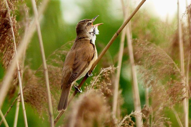 jaki to ptaszek?│zespół przyrodniczo-krajobrazowy Żabie Doły│fot. Henryk Puzio