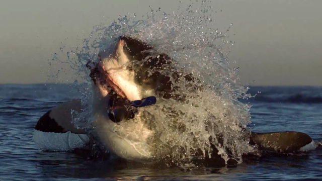 It's Shark Week!!!!  Shark Week 2014 TV Shows : Discovery Channel. Show lineups.
