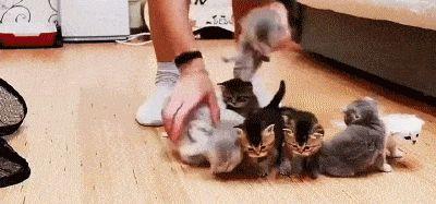 Adjusting Kittens. hehe… hehehe… hahaha!! Hahahahahaha!!!!!