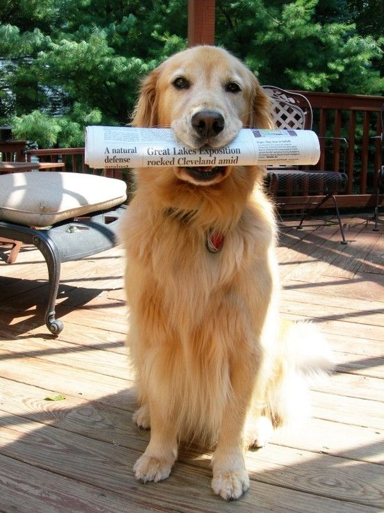 Paper delivery...