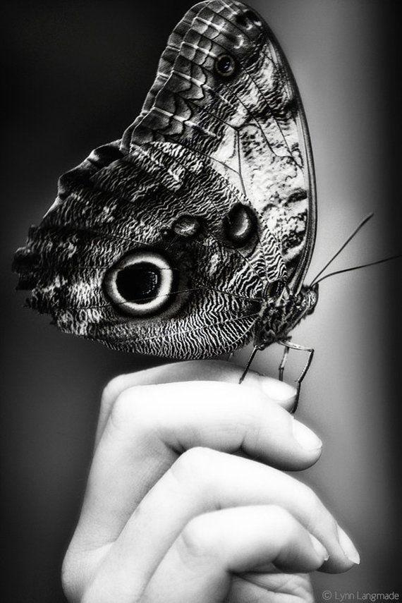 Schwarz-Weiß-Fotografie – Schmetterling Kunst Hand schwarz Schmetterling Wanddekor 8 x 10 … –  Linda Drache – #Hand #Kunst #Schmetterling #schwarz