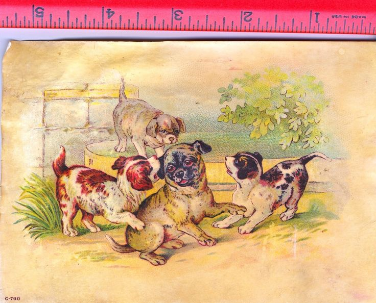 vintage pug pictures | her Pups Pug mixed breed Doggies Cute Puppies frolicking Dawgs vintage ...