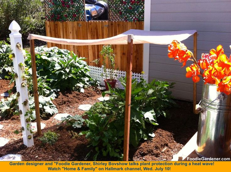 Ten Top Tips For Small Shady Urban Gardens: 58 Best Images About Our Veggie Garden On Pinterest