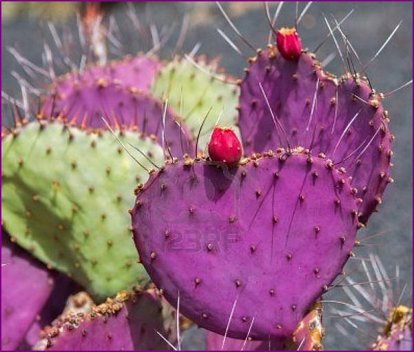 17 best images about cactus y suculentas on pinterest for Jardines con cactus
