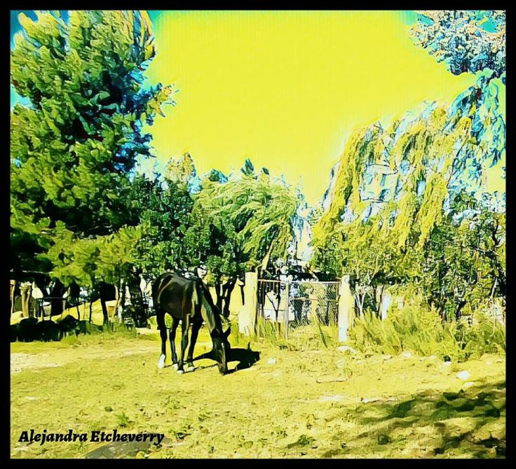 Pastando - Fotografía intervenida, Arte Digital - San Luis, Argentina - Autora: Alejandra Etcheverry