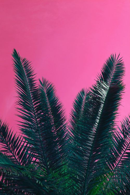 :: pink & green palms ::
