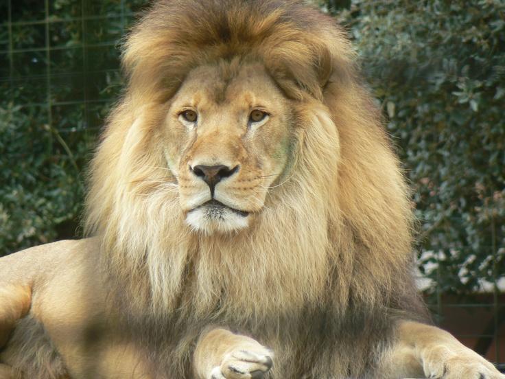 Palmyre Zoo