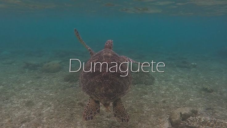This is a Travel Video about Dumaguete. The island is known as one of the top place to retire. This is the destination if you want to experience swimming with turtles.