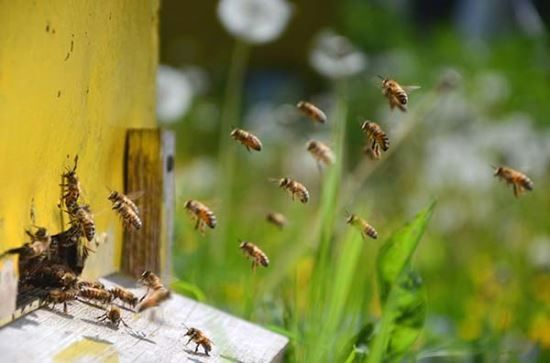 Beginning Beekeeping: What You Need to Know to Get Started
