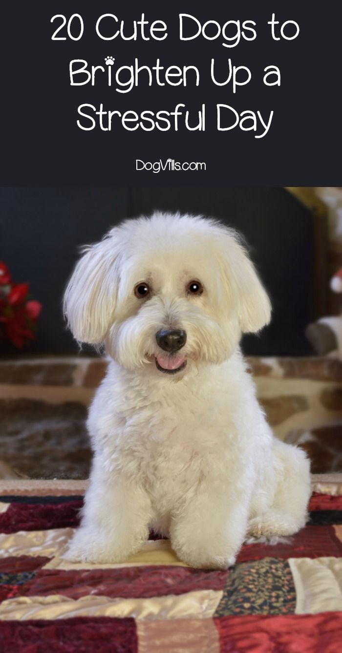 Best 25+ Cute dog pictures ideas on Pinterest | Funny dog ...