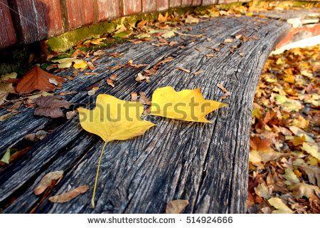 Strange leaf on the bench