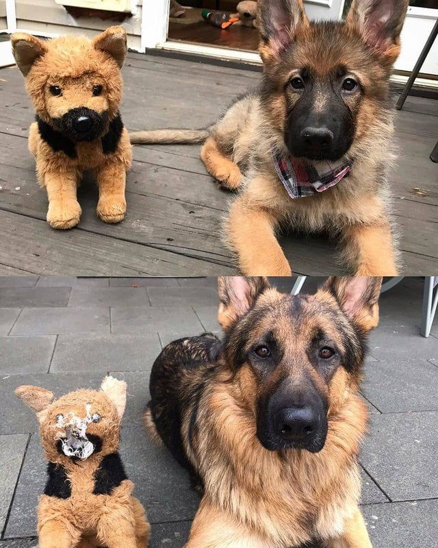 Good Boy And His Favorite Toy Over The Years Dogs Puppies