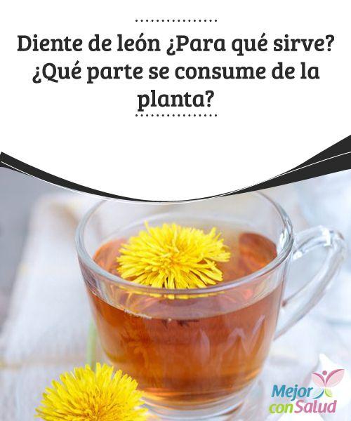 Diente de león: ¿Para qué sirve? ¿Qué parte se consume de la planta? El sabor amargo de las hojas del diente de león nos indica que es rico en fitonutrientes que son muy beneficiosos para nuestro hígado, ya que nos ayudan a eliminar toxinas