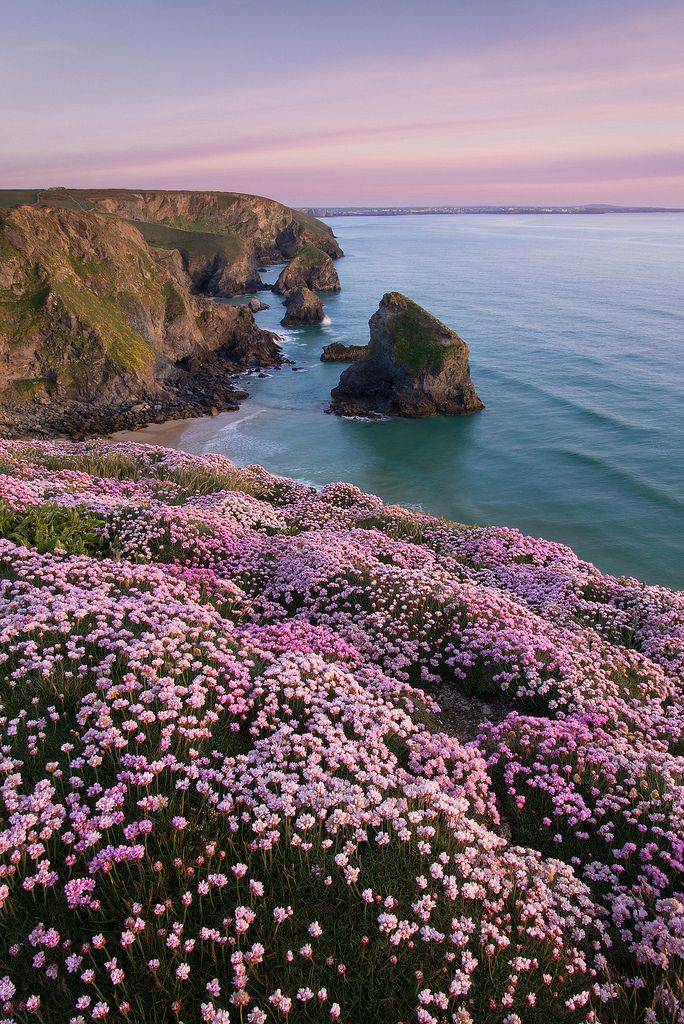 Bedruthan Pinks | England - #England  #Quiz  #UK