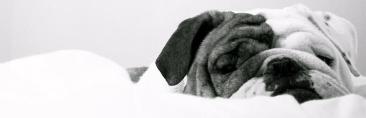 <3  baggybulldogs
