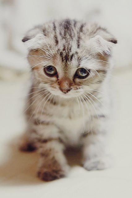 Sad Kitten Eyes | www.pixshark.com - Images Galleries With ...