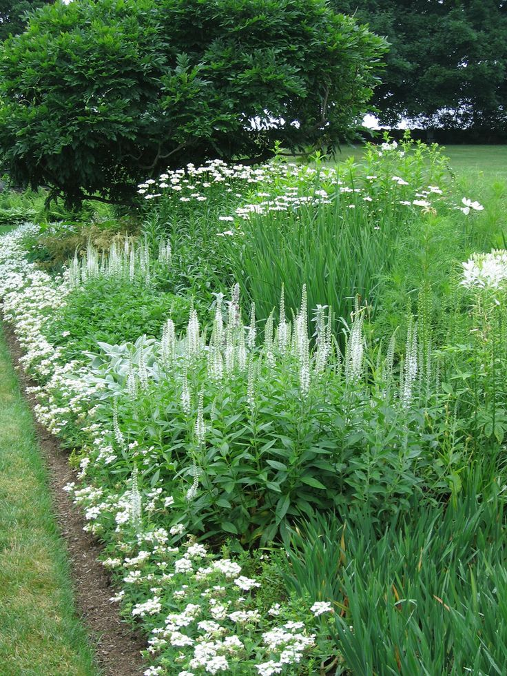 25+ Best Ideas About White Flower Farm On Pinterest | White