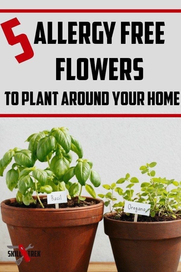 5 Allergy Free Flowers To Plant Around Your Home Skill Trek Planting Flowers Plants Gardening For Kids