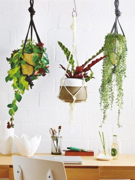 Die 25+ Besten Ideen Zu Exotische Zimmerpflanzen Auf Pinterest ... Haus Mit Wintergarten Zimmerpflanzen Als Dekoration Szene Setzen
