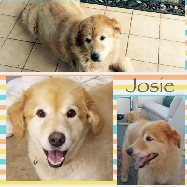 Josie has been adopted! Approx 6-8 yrs old, she was laying in a creek and it was several days before anyone realized she was stuck, she was covered in pressure sores and severely dehydrated. Hart Co. Animal Rescue Inc. Hartwell, GA