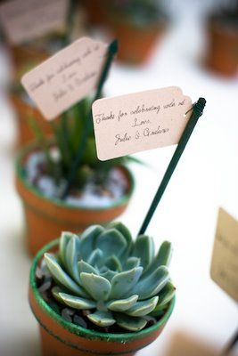 Succulent place setting and favor