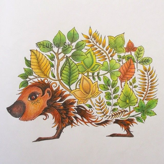 Hedgehog from Enchanted Forest #coloringbook #colouringbook #adultcoloringbook #livrosdecolorir #arteterapia #enchantedforest #florestaencantada #elbosqueencantado #zacarovanyles #carovnyles #maped #colorpeps #colorindo #hedgehog #erizo #ouriço #jez #jezko #jezek