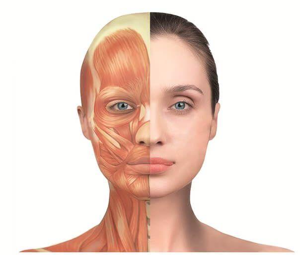Что такое Ревитоника для лица? Это особый комплекс упражнений, направленный на запуск физиологического омоложения. Упражнения ревитоники и информацию о данной программе.