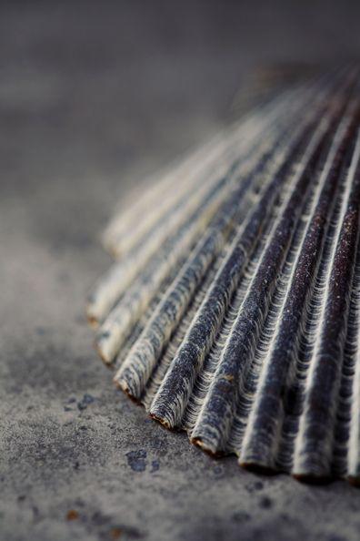 Grey Sea Shell by Katie Newburn